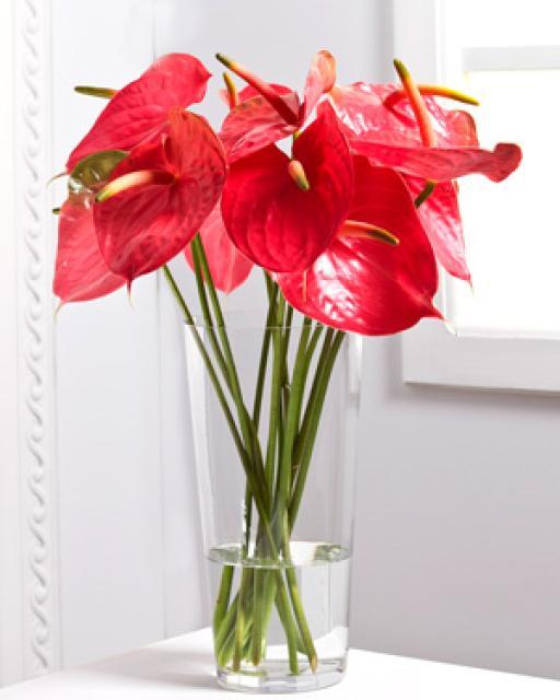 Цветы фламинго